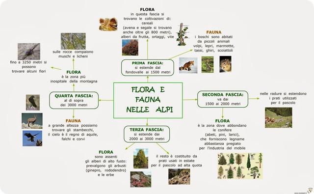 La flora alpina presenta un territorio ricco di boschi di conifere.