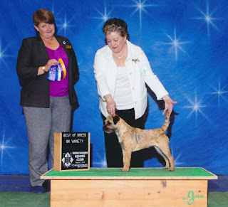 Becky shows Shea and takes Best of Breed Milwaukee Show  2012