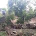 Tebing Longsor dan Pohon Tumbang Tutup Aliran Sungai Cinaregan Cibadak