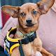 Hot Dog Sounds Game Adoption Day 2011