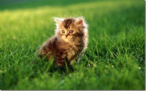 fotos de gatos (14)