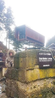 Snow Monkey Livecam supervisor