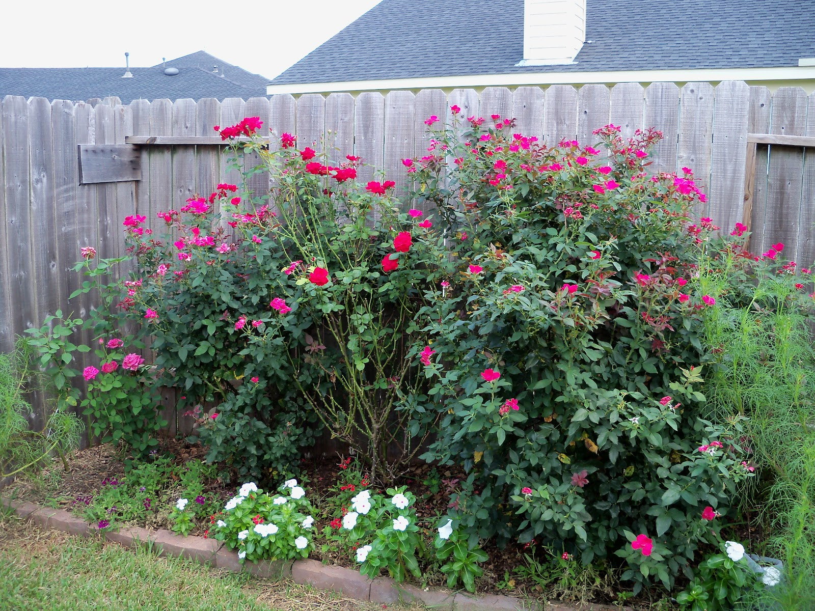 Gardening 2010, Part Three - 101_4874.JPG