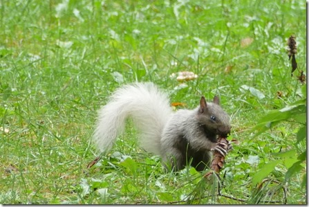 chippewa_falls_lake_wissota_squirrel14