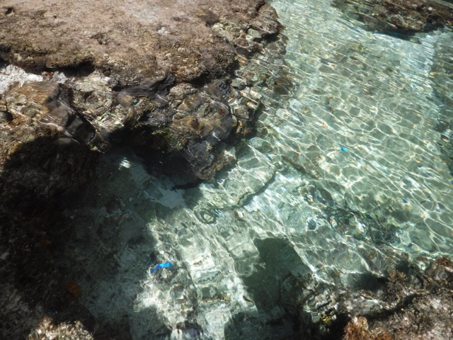 Tide pools at Maeda beach during low tide are a great way to sample the sea life if you are too anxious to try snorkelling