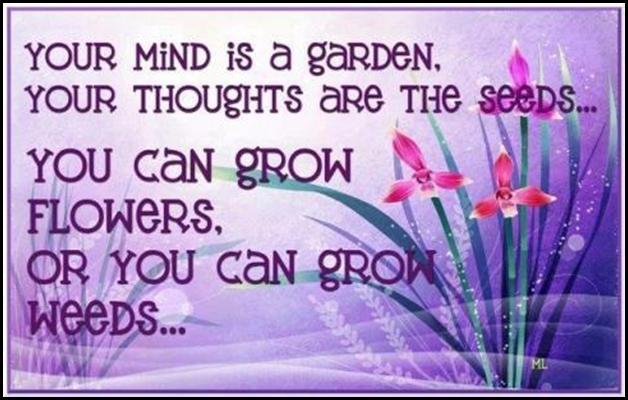 seeds weeds