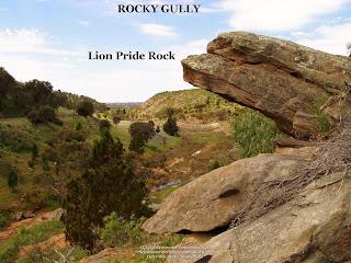 Lion Pride Rock - Rocky Gully