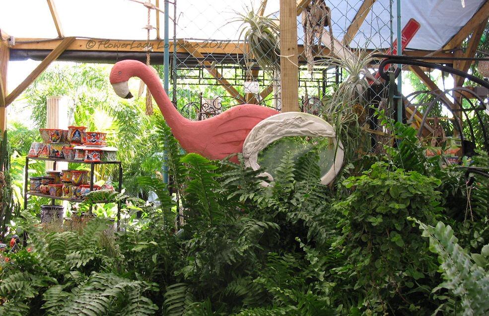 [05-08-ferns-flamingo%5B4%5D]