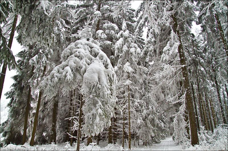 Чешская Сибирь; Česká Sibiř