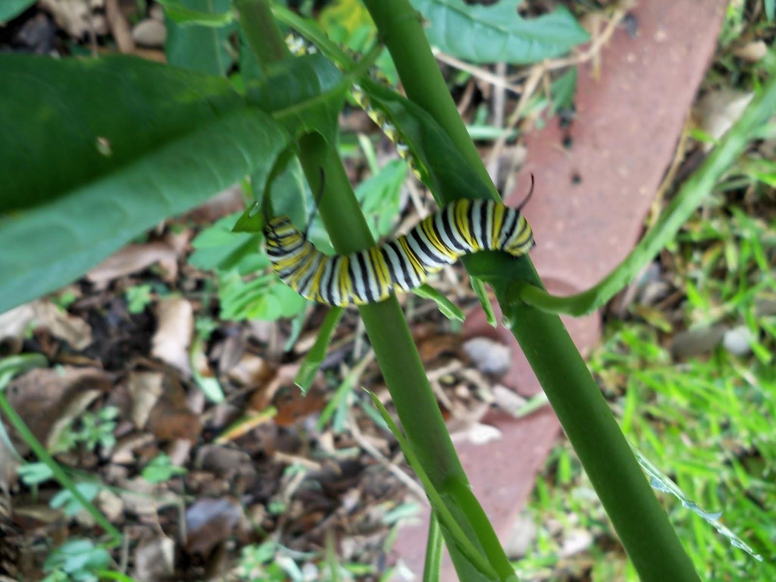 Gardening 2015 - 116_9248.JPG