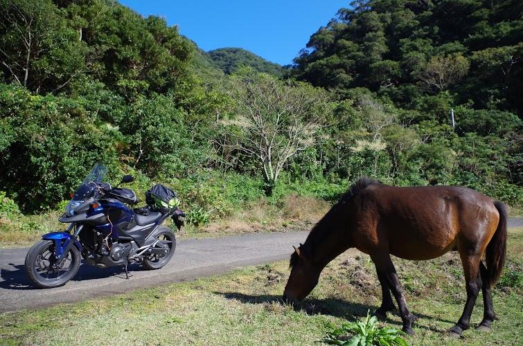 馬とバイク