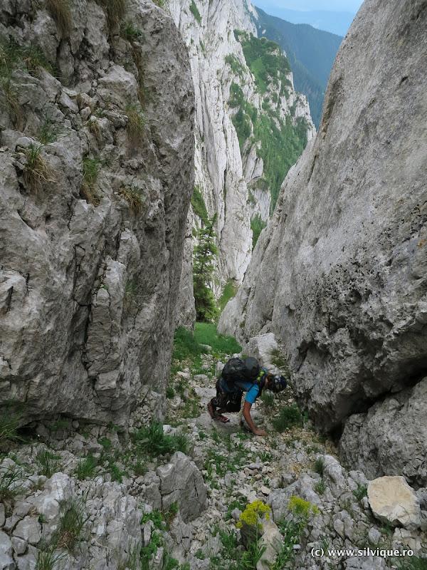 2015.07.26 - P. Craiului - V. Podurilor, Coltii Gemeni, Muchia dintre Timbale
