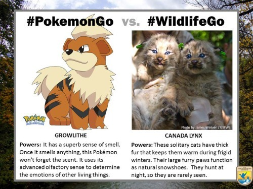 pokemongo-vs-wildlifego-6