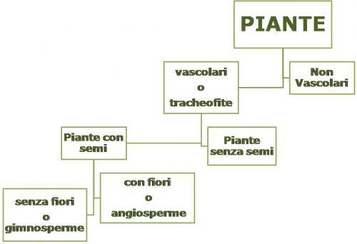 classificazione-piante