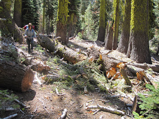 M working through the trees that had crashed on the trail  ©http://backpackthesierra.com