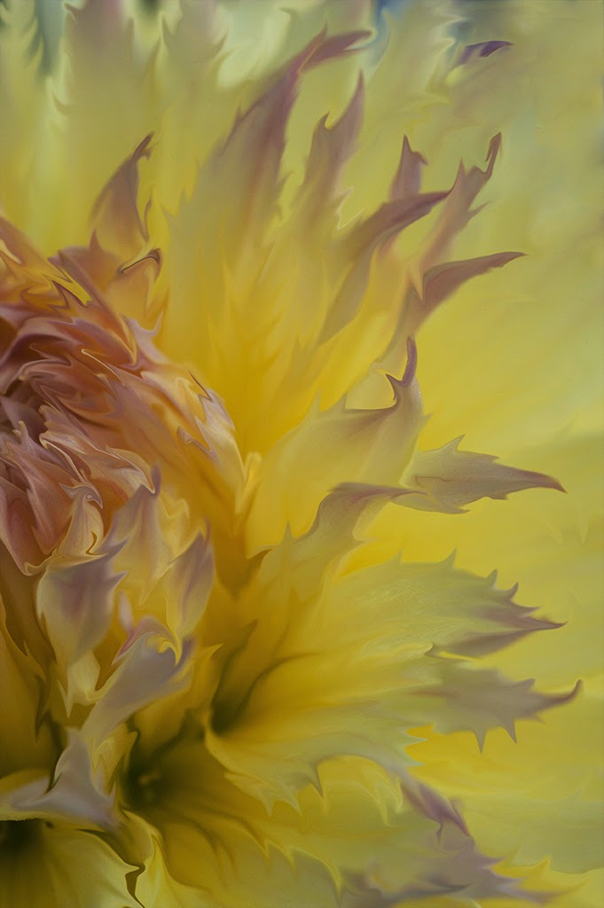 """Fantastic Yellow Dahlia""  - 2nd Place Digital General A"