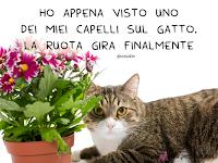 frase divertente battuta gatto barzelletta.png