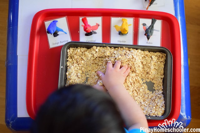 FREE Safari Toob Backyard Birds Matching Cards