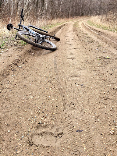 Bear tracks on Sugarbush trail near Roy's Run ski trail