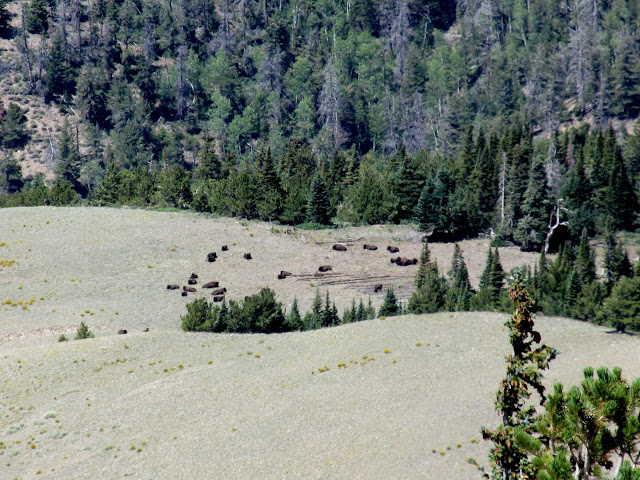 Bison on Burned Ridge