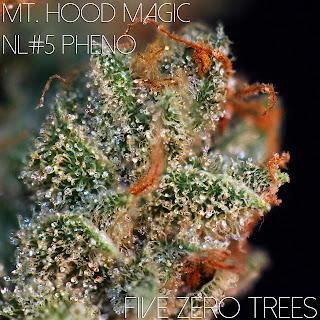 Magic NL#5 FZT Macro