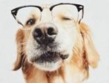 Cute-Dog-C05