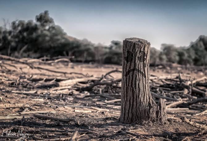 Omnibus Law : Konflik Lahan dan Kerusakan Lingkungan