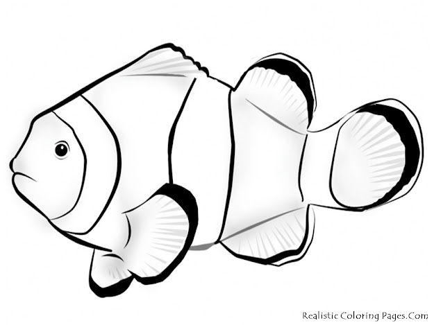 Nemo Outline With Coloring Pages  Finding