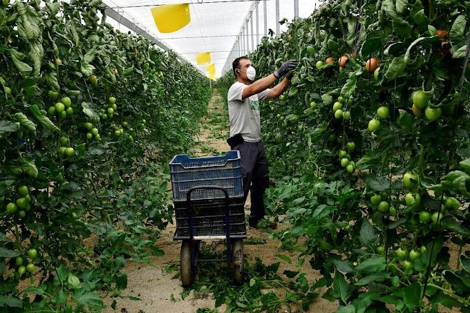 Peón agrícola en Murcia