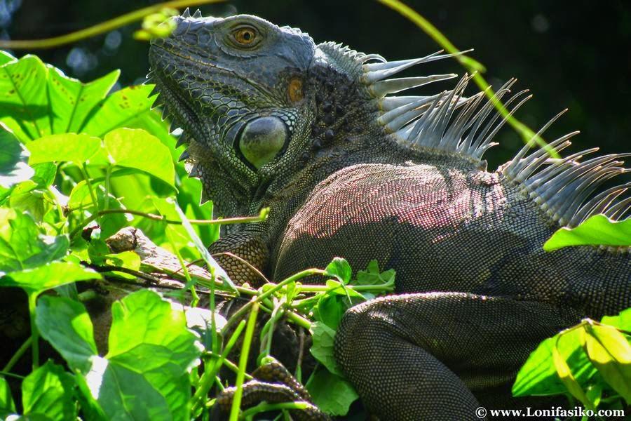 Parque Nacional de Tortuguero, Costa Rica, otra de las maravillas naturales del mundo