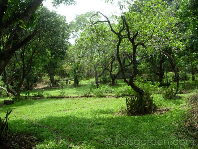 Amenities - main-garden_04.jpg
