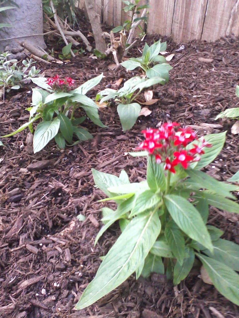 Gardening 2014 - 0404190455.jpg