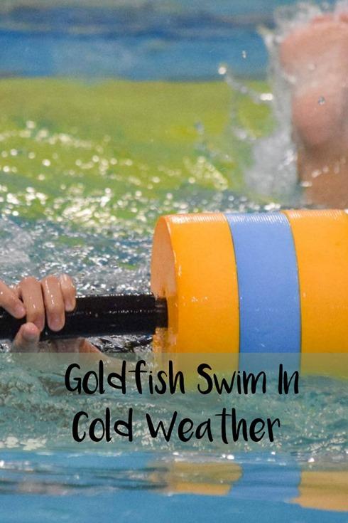 Goldfish Swim In Cold Weather