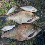 20160623_Fishing_Bakota_155.jpg