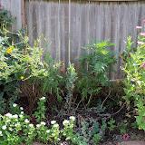 Gardening 2011 - 100_0071.JPG