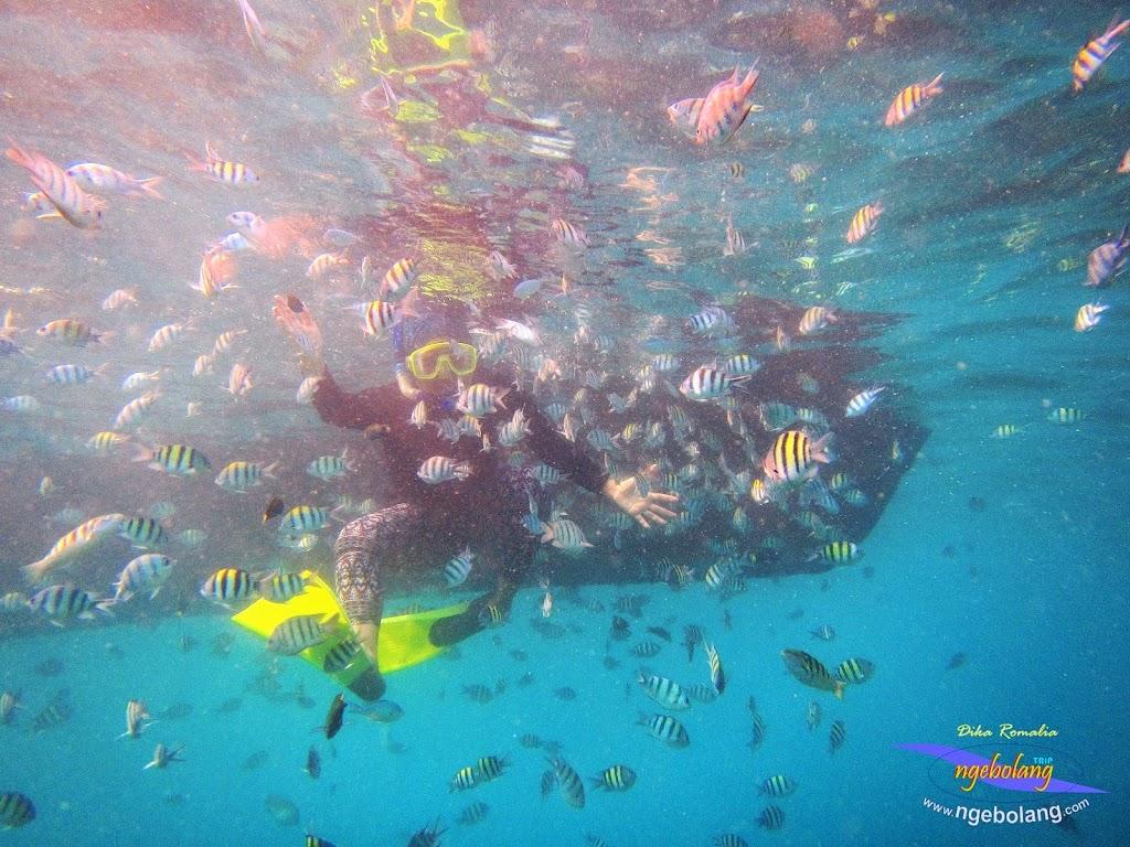pulau harapan 8-9 nov 2014 diro 30