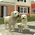 Dog Sim Online: Raise a Family file APK Free for PC, smart TV Download