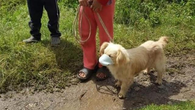 Perrito acude a vacunarse con cubrebocas y se hace vira