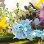 Flower 033_1280px.jpg