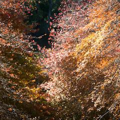 2011 04 25 Mt Lofty Botanic Garden - IMG_6578.jpg