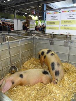 2018.02.25-020 Nioui Ninon porcs de Bayeux