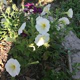 Gardening 2012 - IMG_3147.JPG