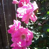 Gardening 2013 - IMG_20130413_110314.jpg