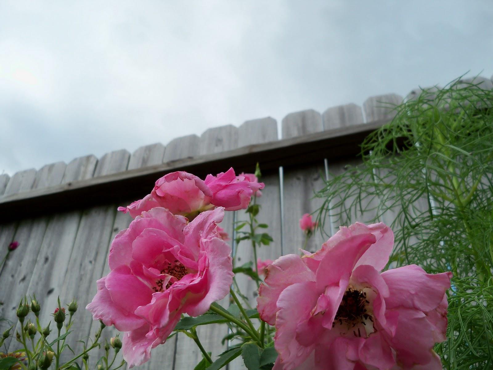 Gardening 2010, Part Three - 101_3551.JPG
