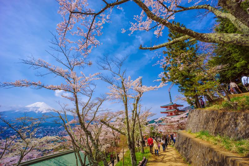 新倉富士浅間神社 桜 富士山 写真8