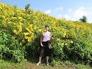 Sunflower (Buatong) Mountain