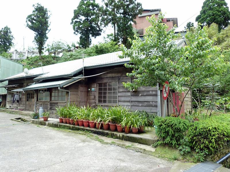 TAIWAN  Dans la region d ALISHAN - P1130872.JPG