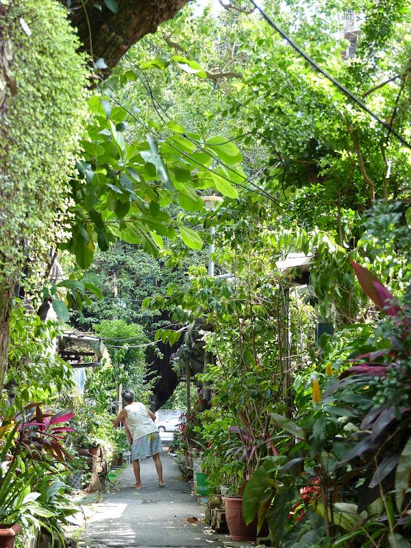 Une ruelle et ses modestes petites maisons cachées dans l exubérante végétation, ca c est Taipei�