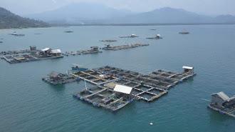 Indonesia - Prancis Perkuat Kerja Sama Perikanan Budidaya Laut