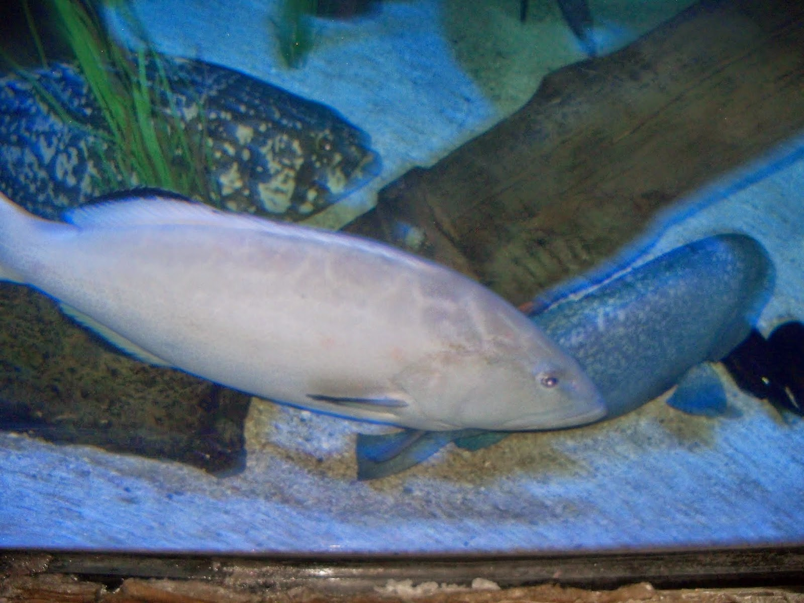 Downtown Aquarium - 116_3987.JPG